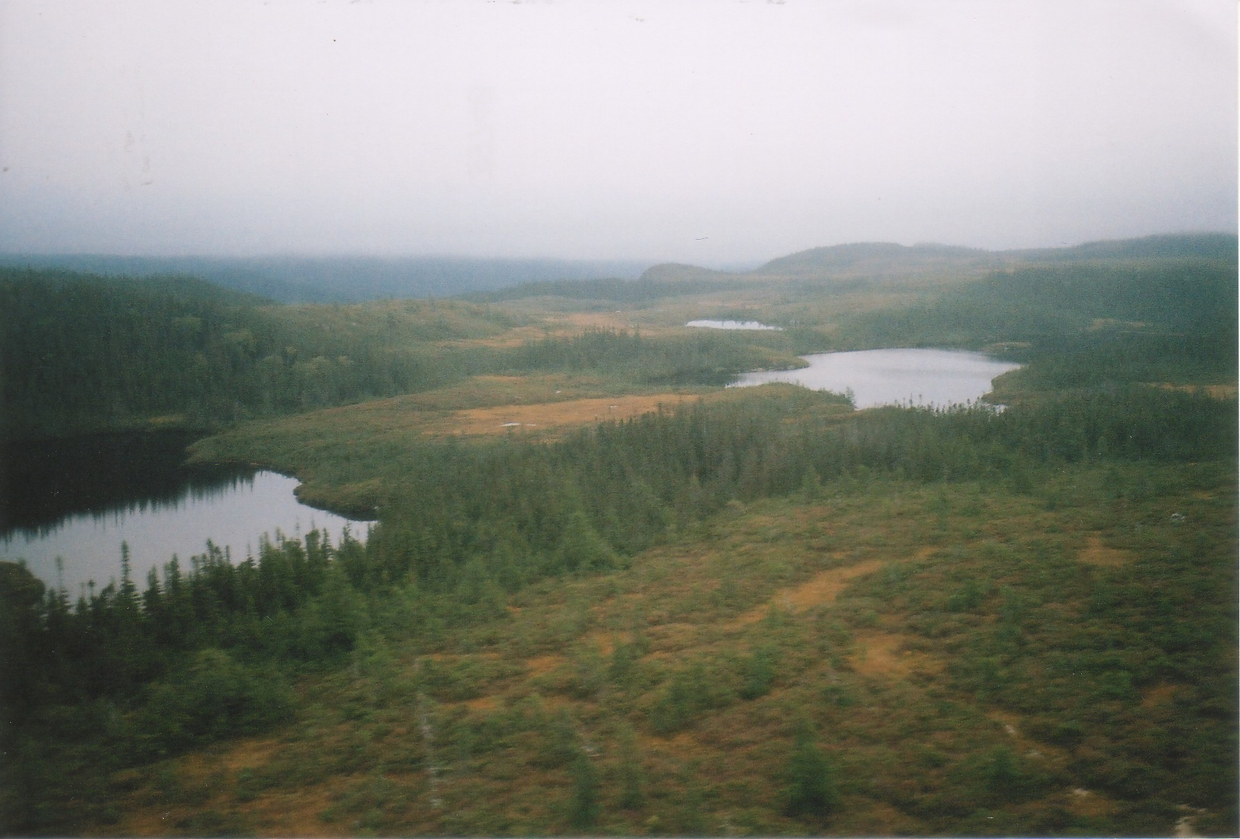Bogs and Tuckamore, Newfoundland